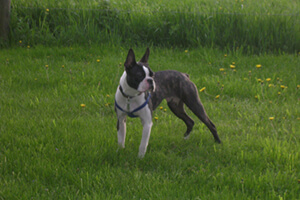 Dog in field