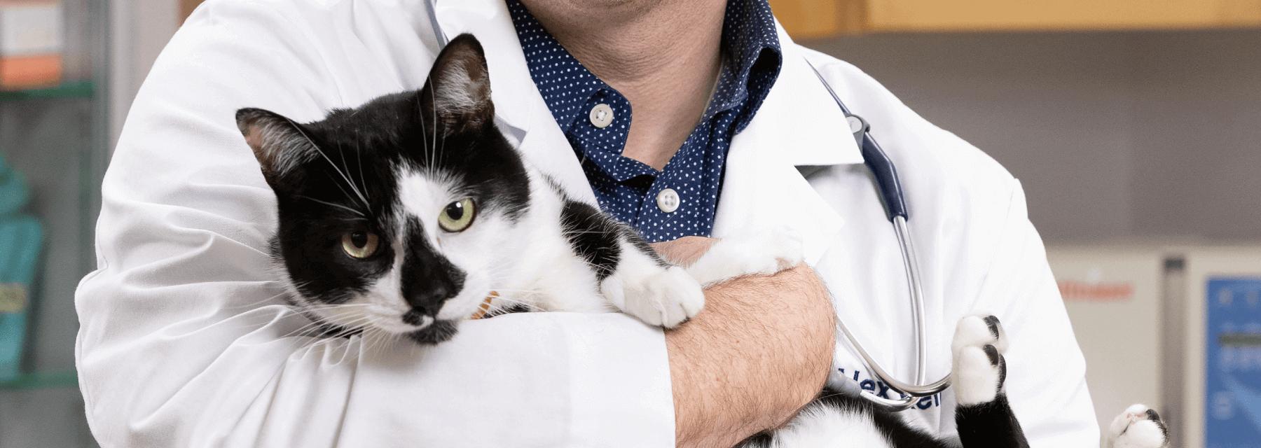 Cancer Diagnosis & Treatment