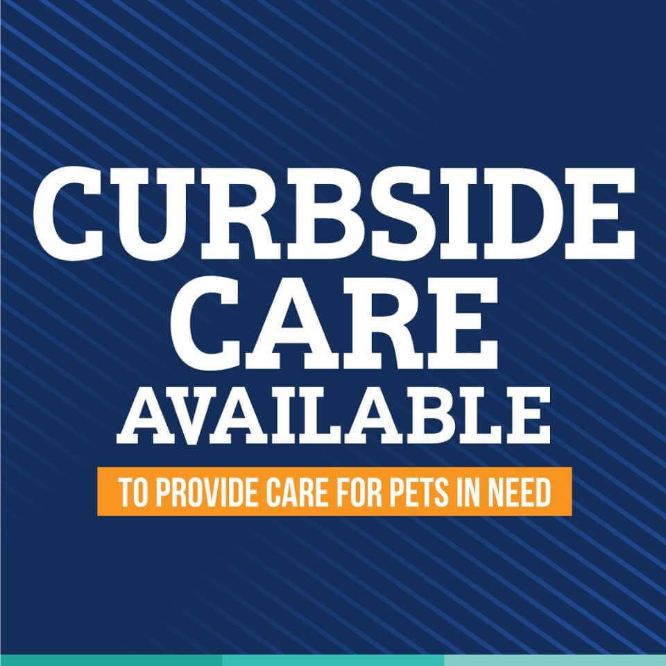 These New Protocols Will Protect You, Your Pet & Our Staff